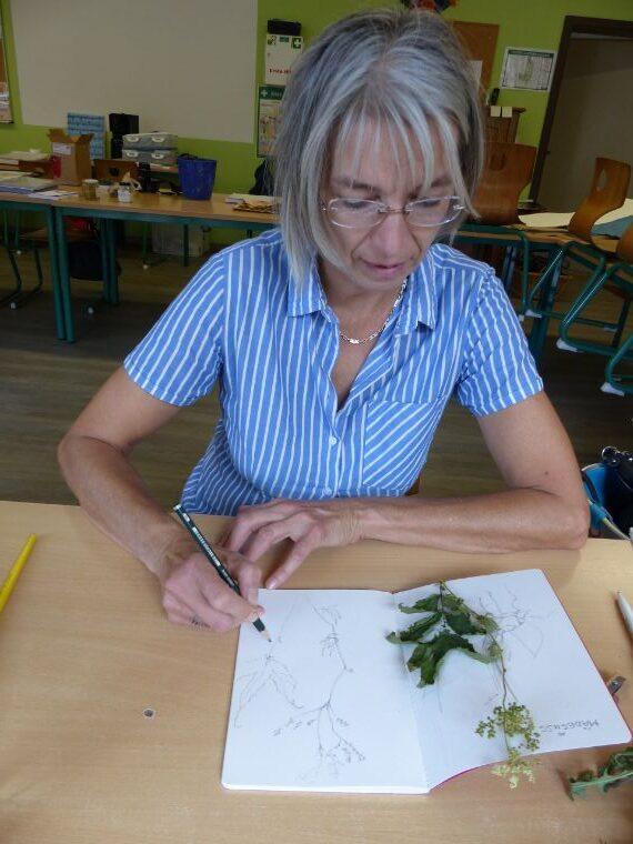 Die Pflanze wird gezeichnet